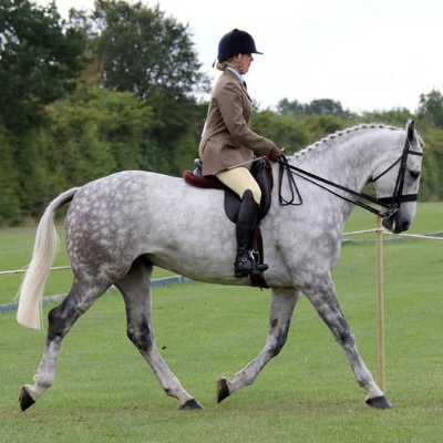 Jenni Winter-Leach riding Sirius in a showing class